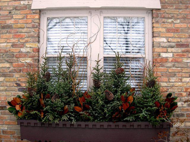 Winter evergreen container / window box