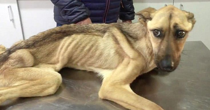 Starving Dog Who Couldn't Stand Up Makes An Incredible Transformation | Bored Panda