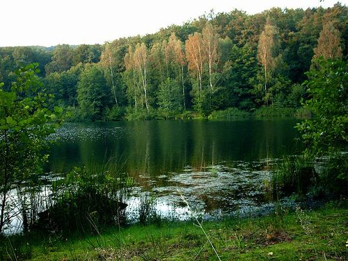 Forest lake in summer by Axel-D, via Flickr
