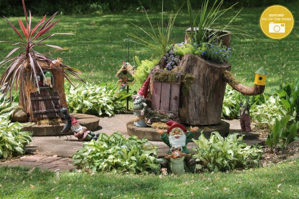 Gnome In Garden: A Pic Of The Week Winner --> Http