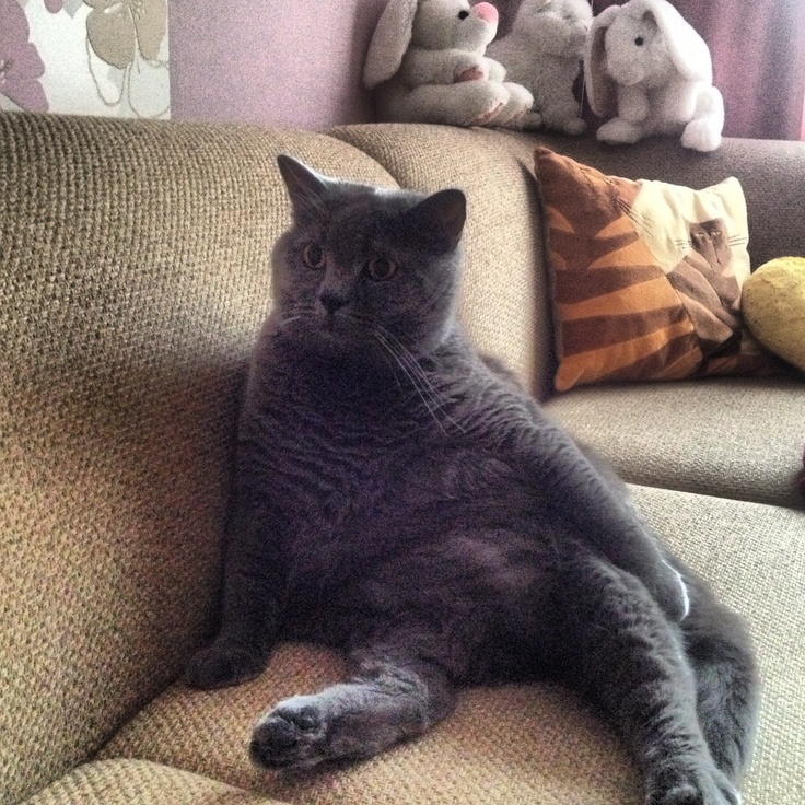 Big cat Tisha!
