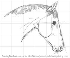 horse to draw   How to draw a Tiger
