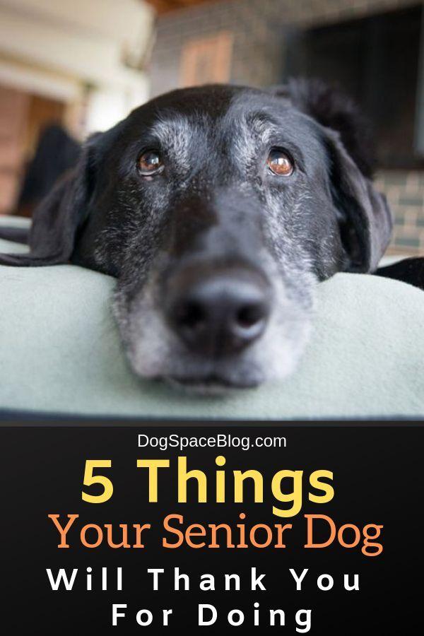 Pin On Senior Dogs Health Wellness Tips