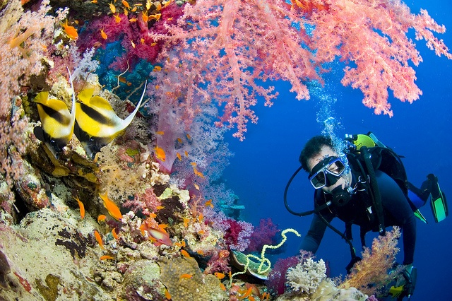 Scuba Diving the Great Barrier Reef: Australia: http://www.flightcentre.ca/blog/destinations/our-top-4-scuba-diving-hot-spots/8951