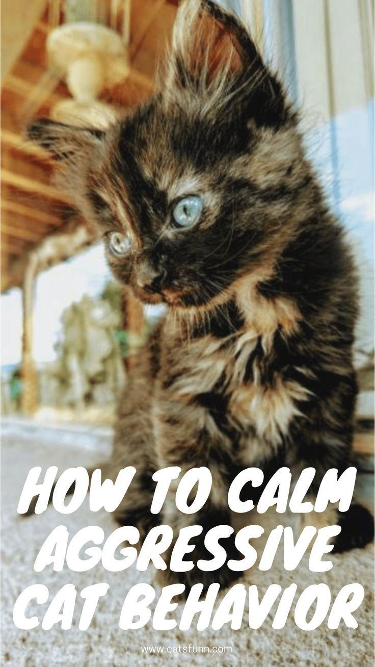 How To Calm An Aggressive Cat In 2020 Cat Behavior Cats Calming Cat