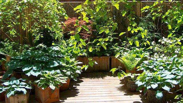Oltre 25 fantastiche idee su piante da balcone su for Piante terrazzo sempreverdi