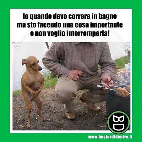 La pipì scappa sempre nel momento meno opportuno! Tagga i tuoi amici e #condividi #bastardidentro #bagno #cane www.bastardidentro.it
