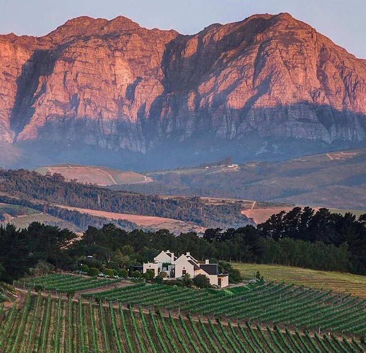 Stellenbosch Winelands near Cape Town