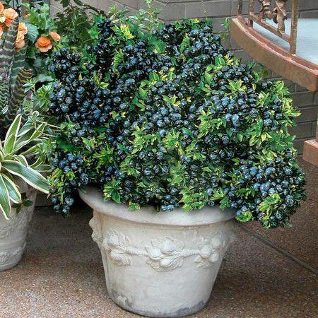 Best 25 tall shrubs ideas on pinterest dwarf shrubs full sun full sun landscaping and - Planting fruit trees in the fall a garden full of vigor ...