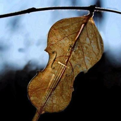 We have fallen in the Arms of Love where all is Music. If all the harps in the world were burned down, still inside the heart there will be hidden music playing.  ~ Rumi