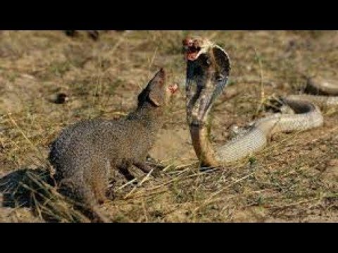 AFRICA  ANIMALES RAROS 3,DOCUMENTALES DE ANIMALES,ANIMALES SALVAJES,AN...