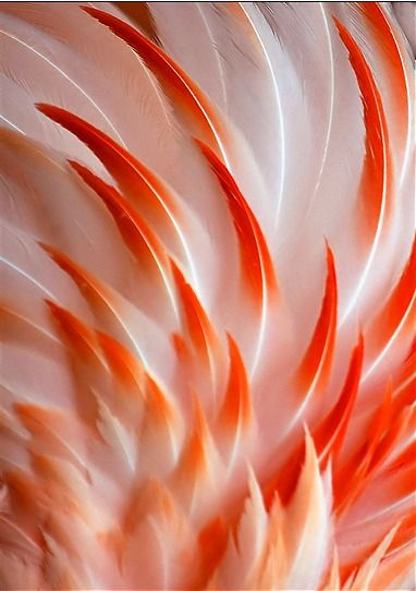 Flamingo Feathers by Jerry King