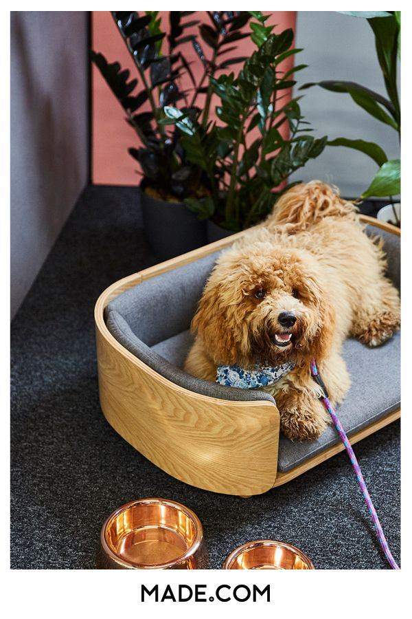 Style And Comfort Kyali Maximises The Minimal Modern Look For Your Pets So Your Space Never Has To Compromise On Design Kyali Con Dog Sofa Pet Sofa Pet Beds