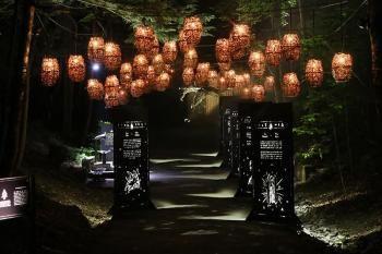 Parc de la Gorge de Coaticook   Foresta Lumina