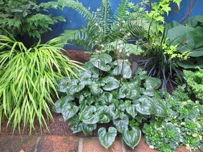 104 best images about garden combinations on pinterest for Low maintenance winter plants