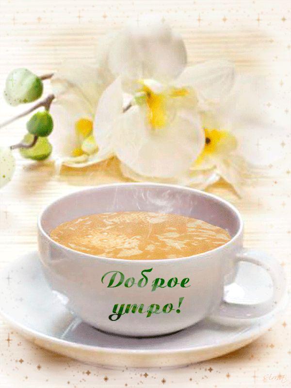 доброе утро орхидеи картинки: 18 тыс изображений найдено в Яндекс.Картинках