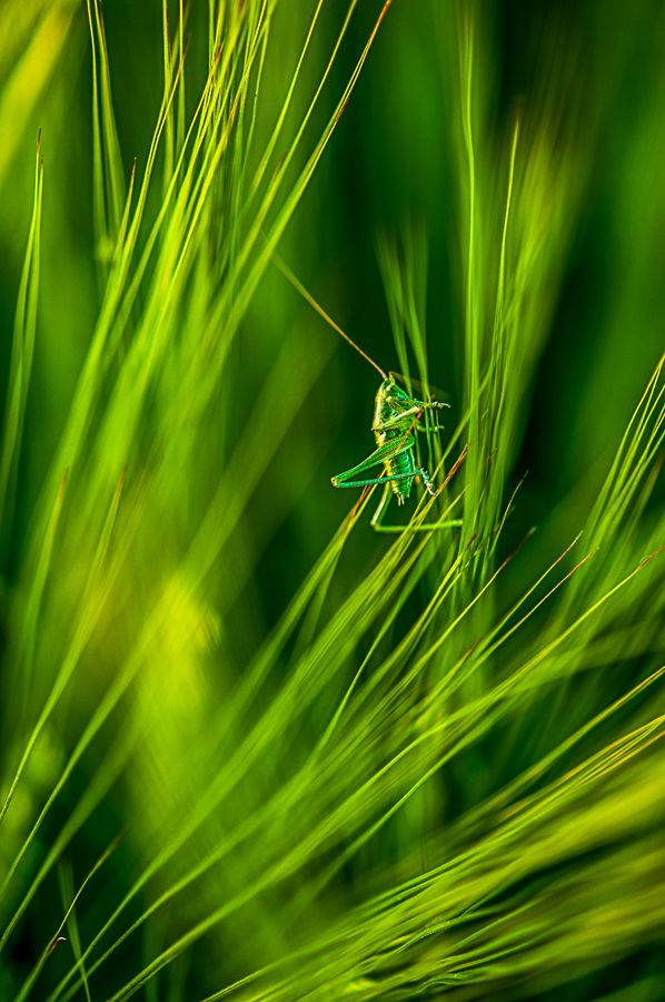 via 500px / grasshopper in the Wind by Leo Pöcksteiner