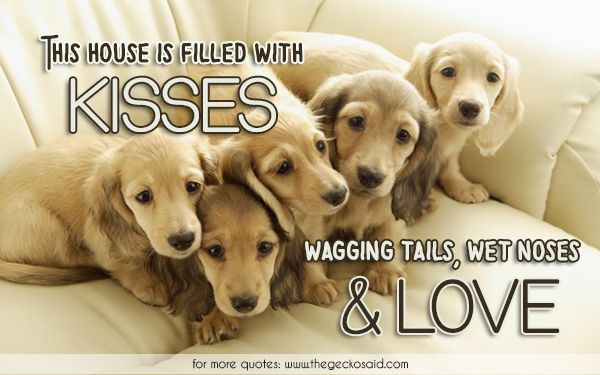 This house is filled with kisses wagging tails wet noses & love.  #filled #house #kisses #love #noses #quotes #tails #wagging #wet  ©2016 The Gecko Said – Beautiful Quotes