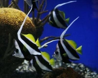 15 best places to go with kids in washington dc maryland for Aquarium washington dc