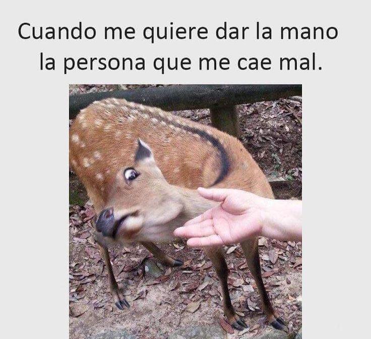 Jajajajaja ¿Os ocurre? #memes #chistes #chistesmalos #imagenesgraciosas #humor http://www.megamemeces.com/memeces/imagenes-de-humor-vs-videos-divertidos