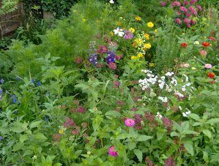 Aranyalma: Kerti körkép - Július közepe  The garden in July