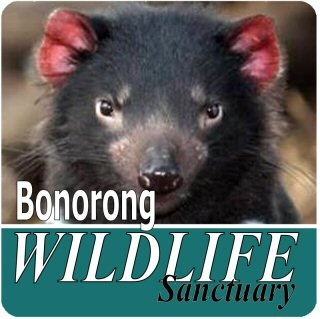 Meet a Tasmanian Devil. Bonorong Wildlife Sanctuary is now part of Huon Valley Escapes. Book three nights through HVE by phone 1800 770 224 and receive one free Bonorong admission ticket. Accommodation at 4 different Hobart locations.