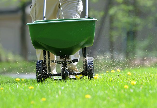 The Order Of Lawn Care Applications Gardenline With Randy Lemmon
