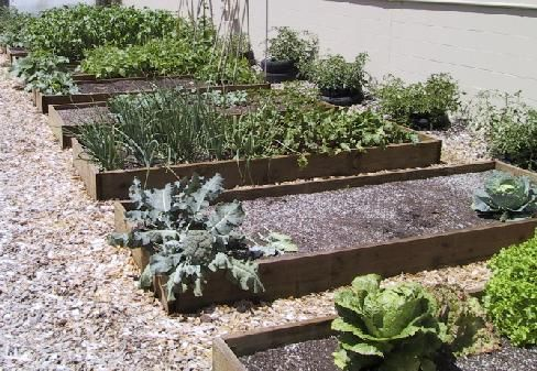 25 trending vegetable garden layouts ideas on pinterest for How to lay out a small vegetable garden