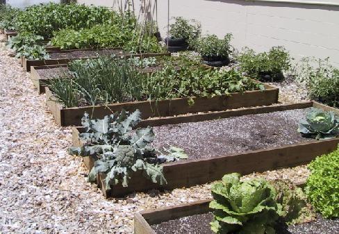 Ed Hume's vegetable garden layout for feeding a family of four.Gardens Ideas, Gardens Beds, Raised Gardens, Garden Layouts, Vegetables Gardens, Raised Beds Gardens Layout, Gardens Plans, Garden Beds, Veggies Gardens