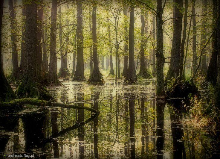 Park Krajobrazowy, rezerwat,  Dolina Baryczy, Dolny Śląsk, Poland.