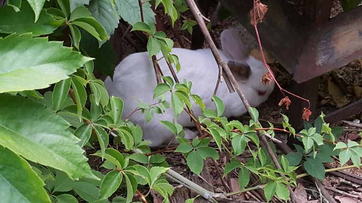 "My rabbit ""Spic"""