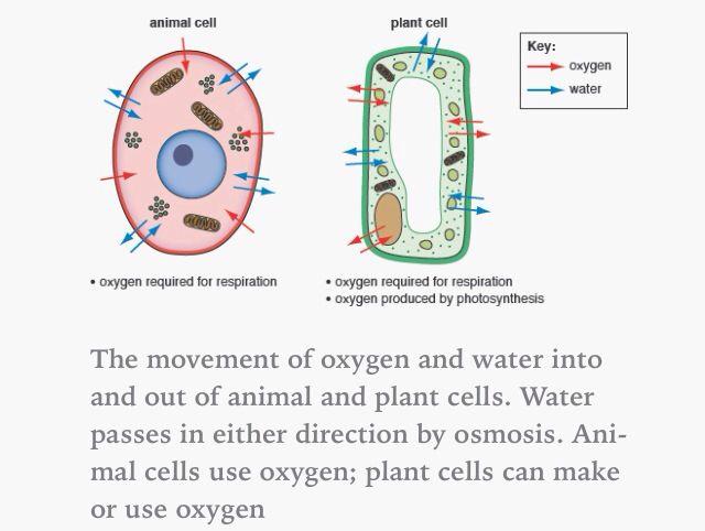 Diffusion & osmosis. | School | Pinterest | Aqa