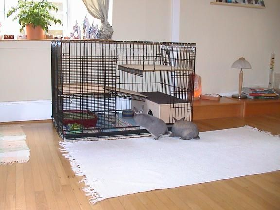 Homemade Rabbit Cages | BunSpace.com Forum: Pictures of homemade/custom made bunny homes