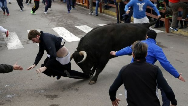 A young man has been gored by a large fighting bull in what a world-renowned Spanish surgeon says is the biggest goring wound he has ever operated on. http://www.brisbanetimes.com.au/world/young-man-seriously-gored-while-running-with-bulls-in-spain-20150215-13fna4.html