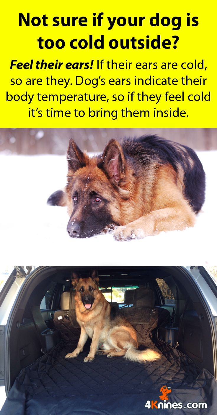 Have errands to run? Consider getting a dog sitter or bringing your dog with you! Make sure you've got a 4Knines Car Seat Cover to keep your seats fur and snow free while you're out: http://4knines.com/collections/all/products/suv-60-40-split-cargo-cover-liner-for-dogs-and-pets-extra-large-black