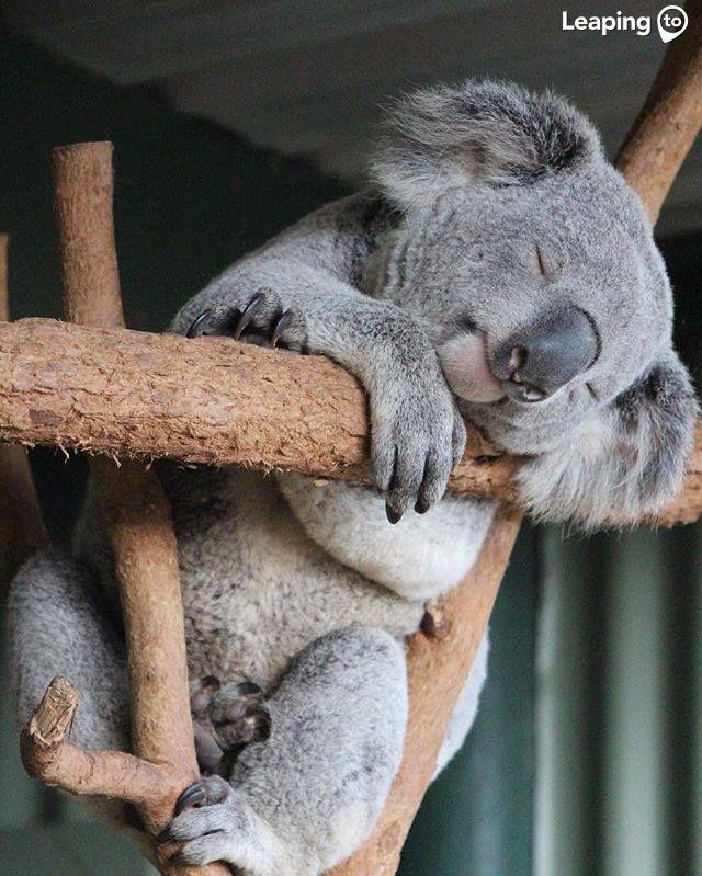 Mejores 19 imágenes de Animales de Australia en Pinterest   Animales ...