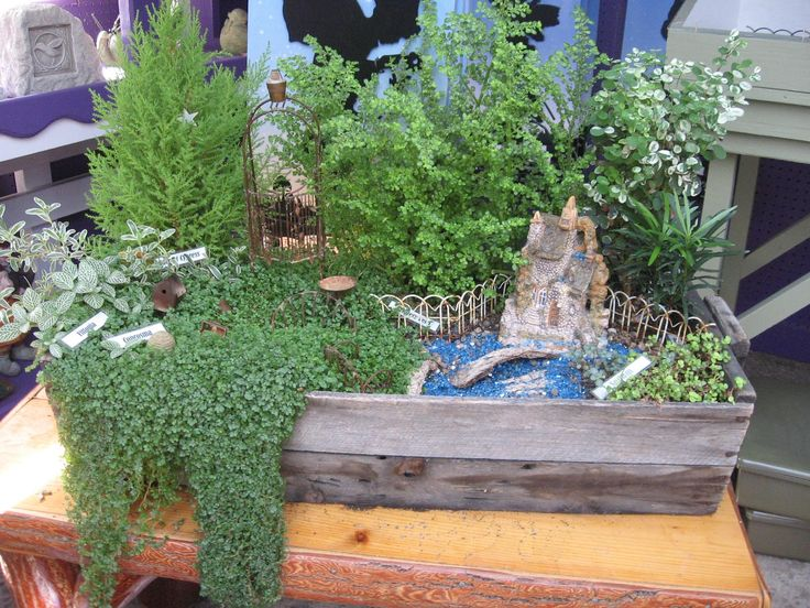 Pictures Of Fairy Gardens | CREATING A FAIRY GARDEN
