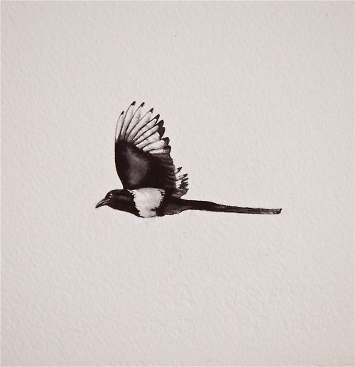 HOLLEY POTTS | Fine Liner and Ink. Magpie Tattoo commission. ...