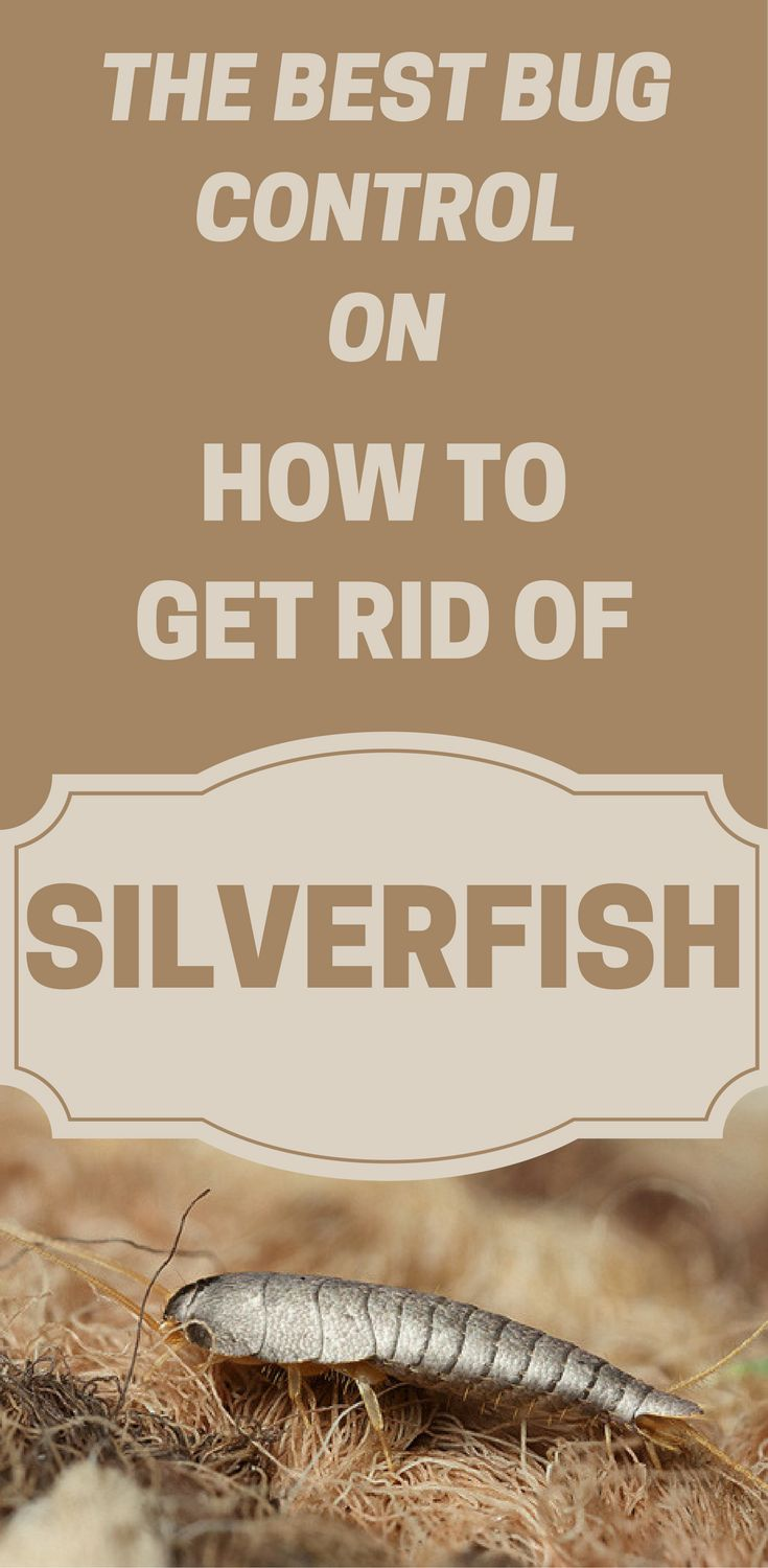 the 25 best get rid of silverfish ideas on pinterest silver fish bug silverfish and. Black Bedroom Furniture Sets. Home Design Ideas