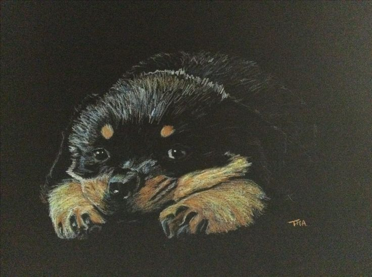 Pup. Colour pencil on black paper. By Fiona Ansink