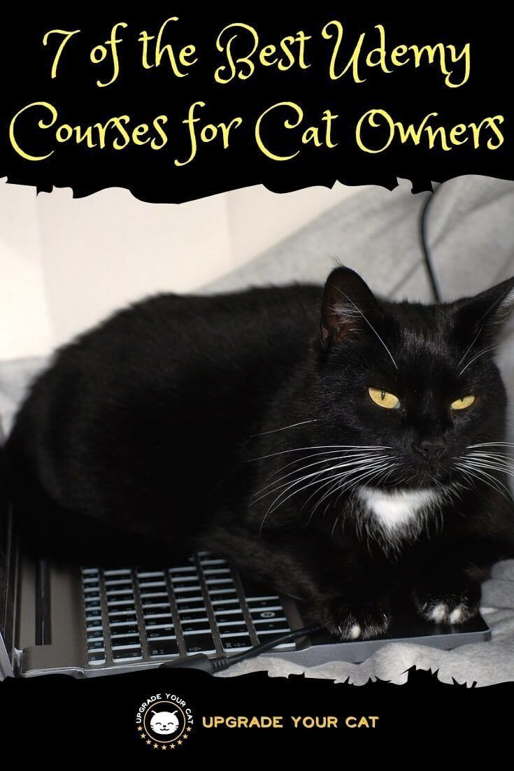 7 Of The Best Udemy Courses For Cat Owners First Aid Behavioral Problems Litter Box Issues Baking Treats And More Upgrade Your Cat Introducing A New Cat Cat Owners Cats