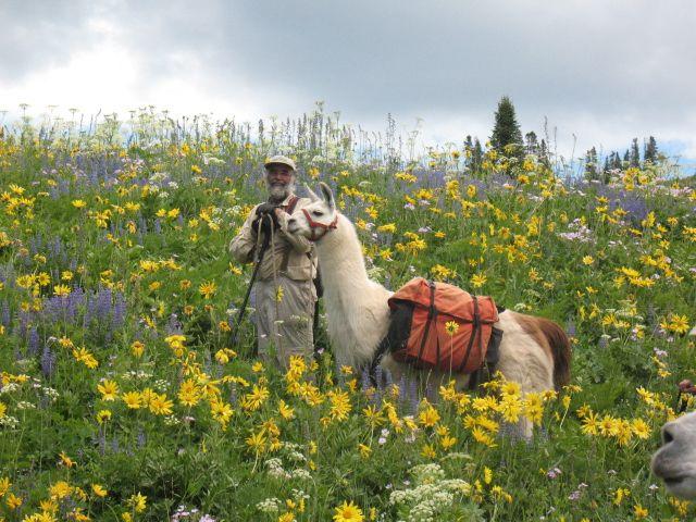Llama Trekking At Wind River Range - WY
