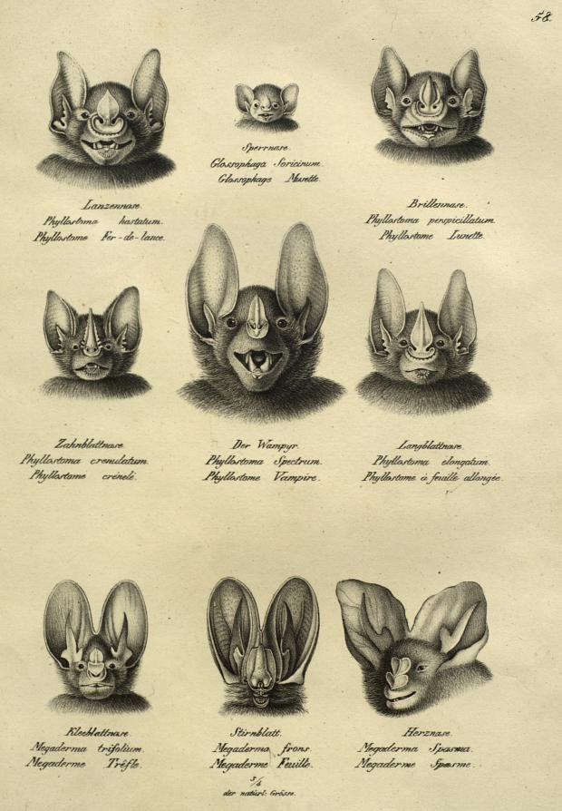 Têtes de chauve-souris | Musée des Confluences
