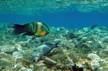 Velký bariérový útes fotky