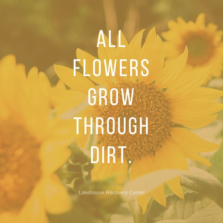 Floral Positive Motivational Quotes: 108 Best Images About Inspirational Quotes On Pinterest