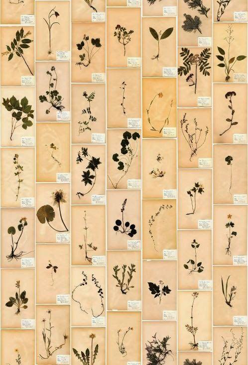 #86 Botanicals ~ A Modern Approach to Display http://bricolage-julier.blogspot.com