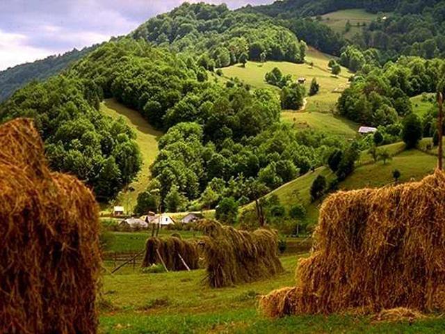 Cazare Romania : hoteluri, pensiuni, vile, cabane, apartamente regim hotelier, garsoniere regim hotelier, sali de conferinta, restaurante. Locatii populare din Romania.