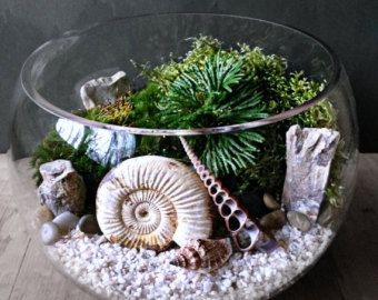 Geometric Glass Diamond Terrarium with Plants von DoodleBirdie