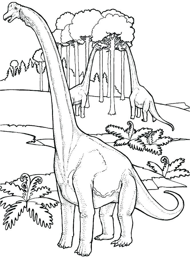 Brontosaurus Coloring Page Coloring Page Coloring Page Animals