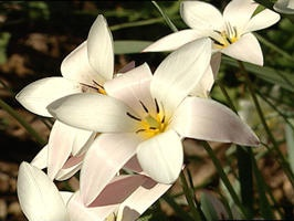 Moon Garden: For a garden that lights up at night, try these plants.